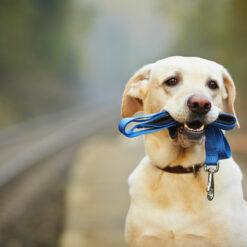 Hundehalsband & Leine